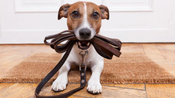 Dog with lead